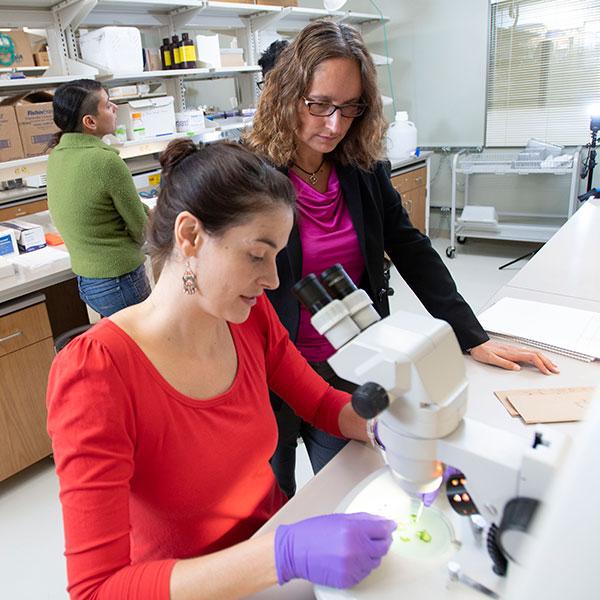 Boosting biofuel research